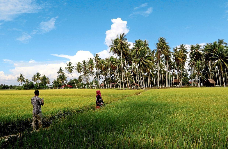 Jangan lepaskan peluang, hanya RM15 dah boleh pusing satu Pulau ...